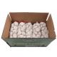 SUCCESS Fresh Garlic 5cm Carton 10KG