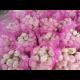 Liandahang Garlic 5cm mesh bag